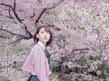sakuraの画像(SAKURAに関連した画像)