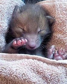 動物 赤ちゃん キツネの画像(プリ画像)