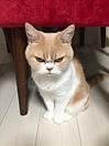 おもしろ 猫 プリ画像