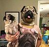 おもしろ 犬 プリ画像