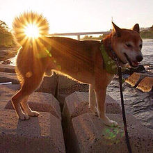 おもしろ 犬 動物の画像(プリ画像)