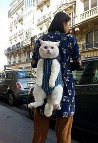 おもしろ 猫の画像(プリ画像)
