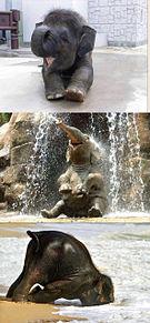 おもしろ 動物の画像(プリ画像)