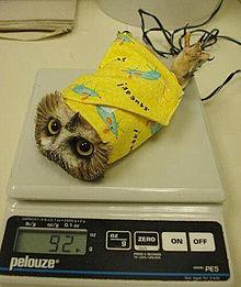 おもしろ 体重測定 プリ画像