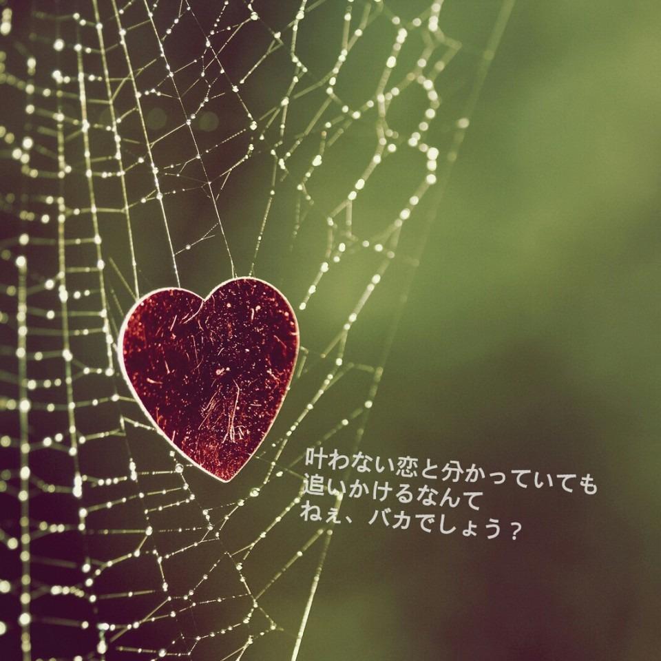 加藤ミリヤの画像 p1_14