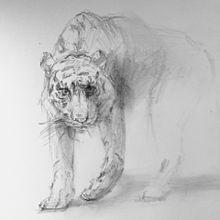 虎の画像(プリ画像)