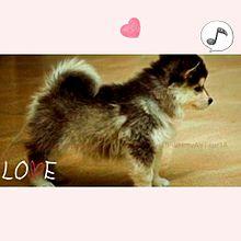 子犬の画像(癒しに関連した画像)