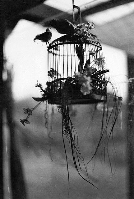素材 鳥 モノクロの画像(プリ画像)