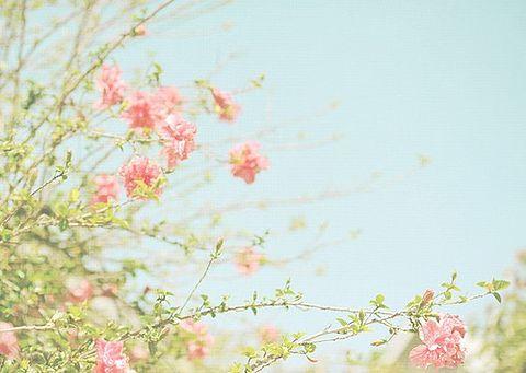 素材 花の画像(プリ画像)