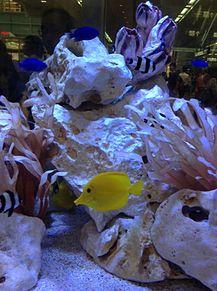 熱帯魚 プリ画像