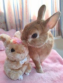 うさぎの画像(ウサギに関連した画像)