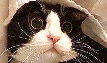 ネコの画像(ネコに関連した画像)