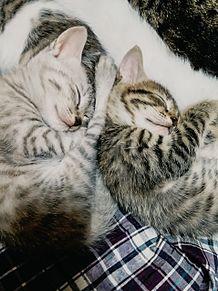 子猫画像の画像(プリ画像)
