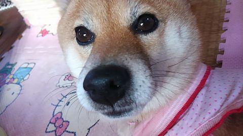 meの愛犬!の画像(プリ画像)