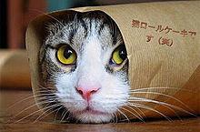 猫ロールケーキの画像(プリ画像)