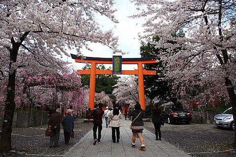 桜&パワースポットを同時に楽しめる場所とは?の画像 プリ画像