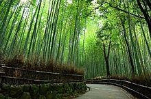 新しい恋へと導く京都のパワースポットでエネルギーチャージの画像(パワースポットに関連した画像)