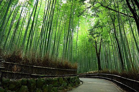 新しい恋へと導く京都のパワースポットでエネルギーチャージの画像 プリ画像