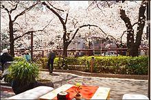 食事&花見の出来る目黒川沿いのお店3選の画像(目黒川に関連した画像)
