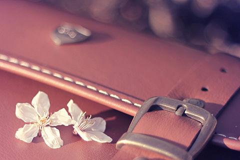 カバンに舞い落ちた桜の花びらたちの画像(プリ画像)