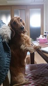 犬の画像(ココちゃんに関連した画像)