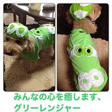 犬用エイティングスーツの画像(関ジャニ 手作りに関連した画像)