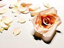 紙のバラ プリ画像