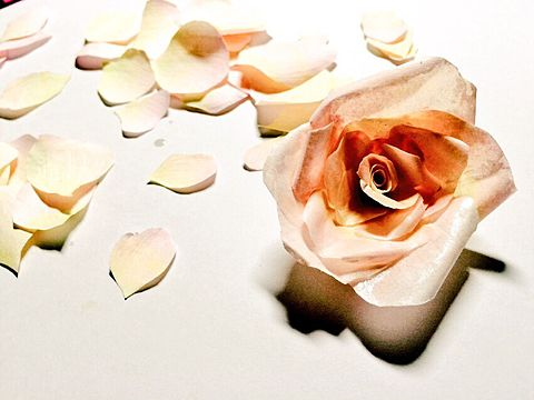 紙のバラの画像(プリ画像)