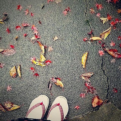 秋の画像(プリ画像)