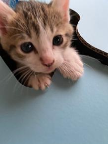 猫の画像(可愛いに関連した画像)