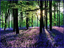 森 キレイ 癒し 自然 パワースポットの画像(パワースポットに関連した画像)