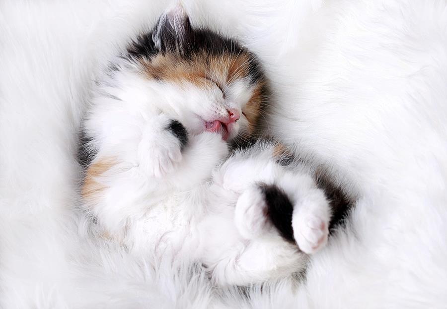 可愛すぎる子猫の高画質な画像