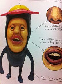 リトルハナガシラの画像(リトルハナガシラに関連した画像)