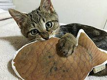猫さんの画像(プリ画像)