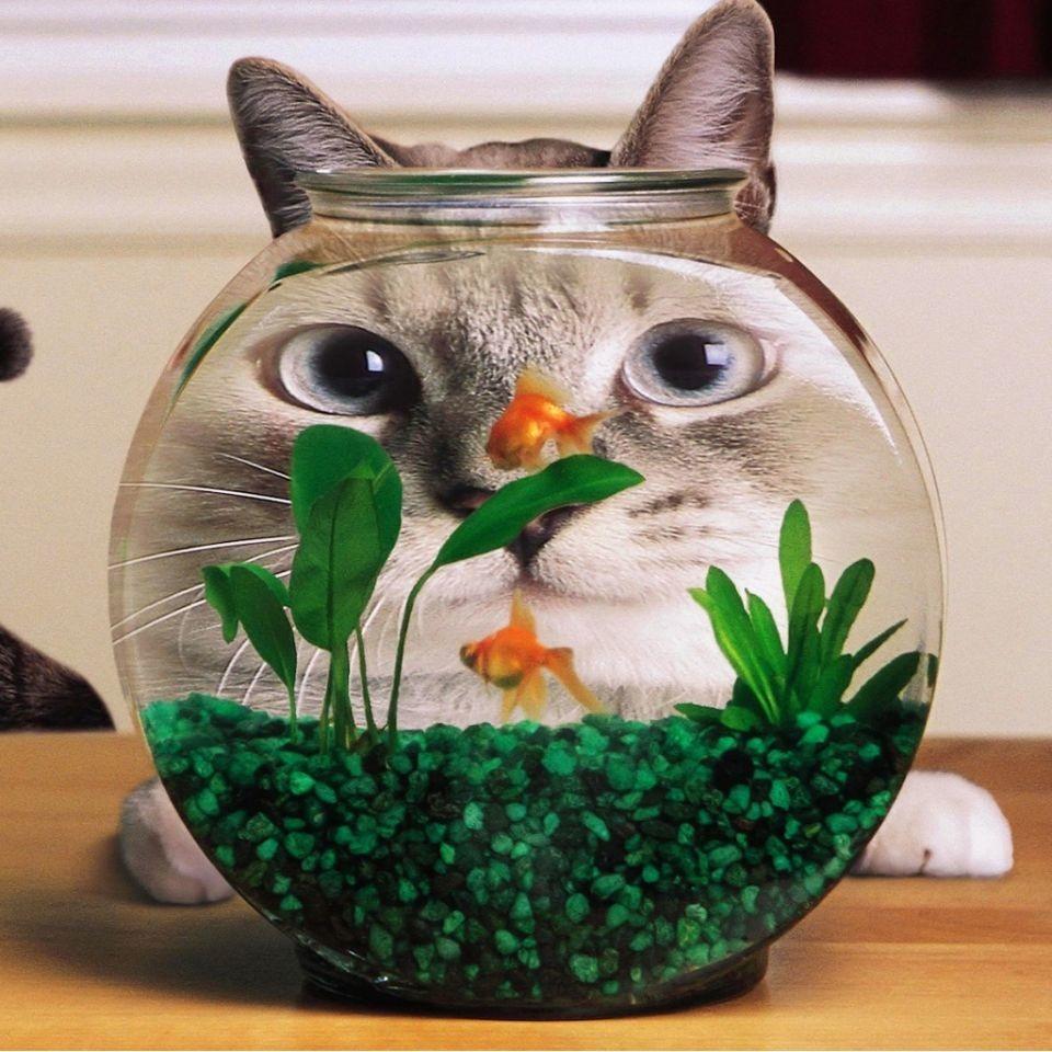 ねこ 猫 動物 かわいい 壁紙 待ち受け 高画質の画像