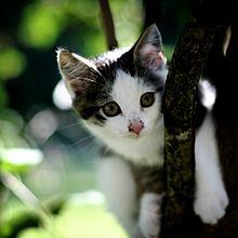 ねこ 猫 動物 かわいい 壁紙 待ち受け 高画質