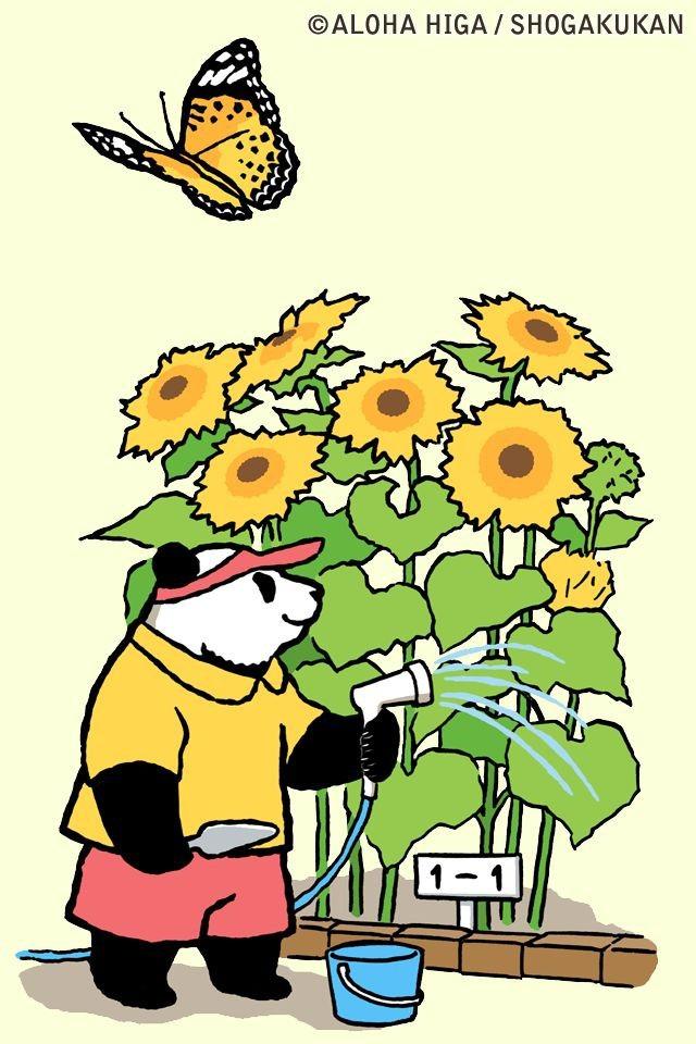 しろくまカフェのシロクマくんが向日葵を育てる壁紙
