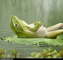 井の中の蛙大海を知らず。 プリ画像