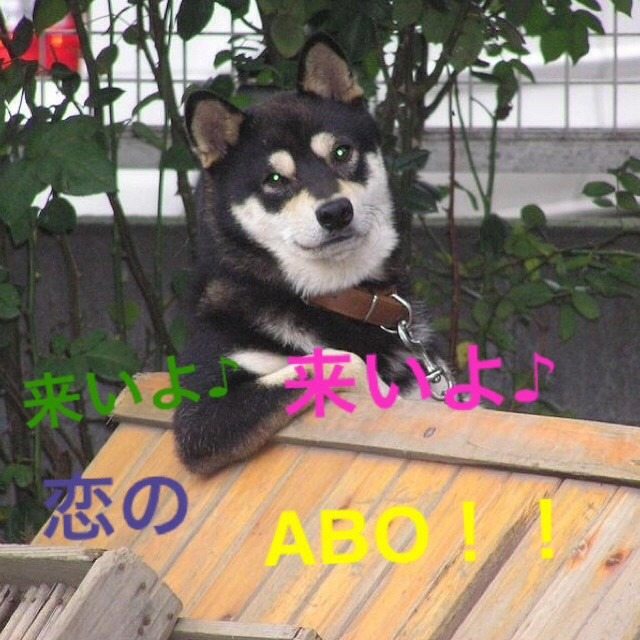 NEWS 恋のABOの画像 プリ画像    完全無料画像検索のプリ画像!