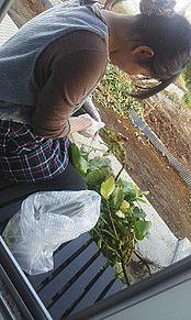 田舎 嫁 横顔 奥さん 野菜 農家の画像(プリ画像)