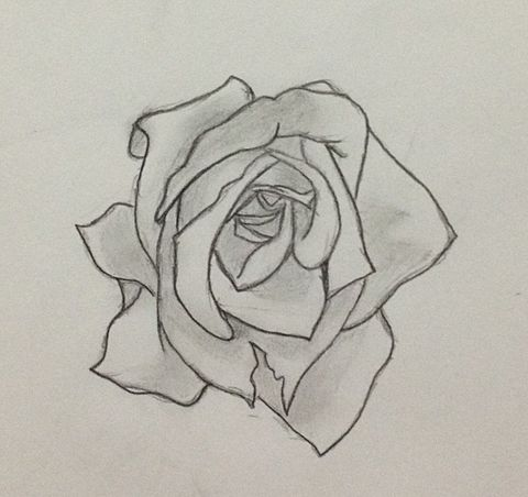 まさかの薔薇です‼の画像(プリ画像)