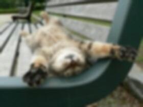 ○ cat ○の画像(プリ画像)