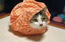 待ち受け おもしろ 猫の画像(おもしろ 待ち受けに関連した画像)