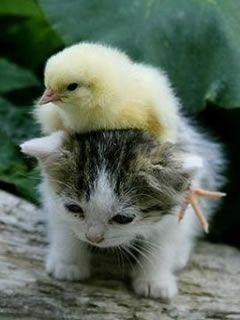 猫とひよこ
