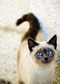 cat プリ画像