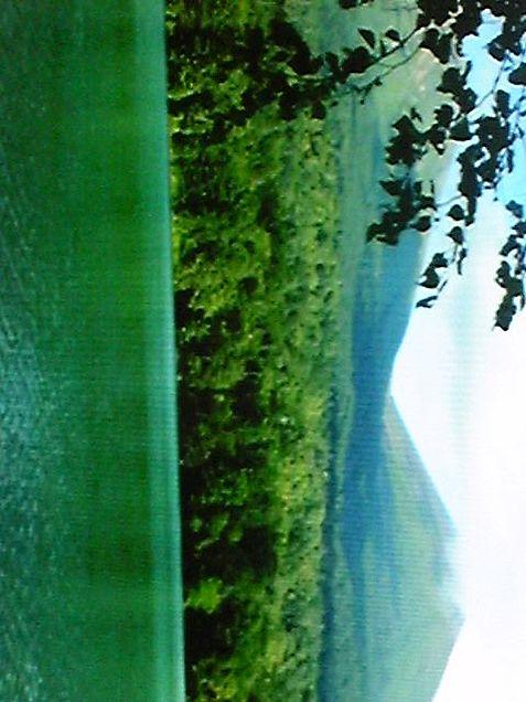 森の画像(プリ画像)