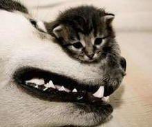 OMG!! cute<33の画像(プリ画像)
