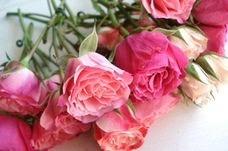 pink素材綺麗パステル花かわいい壁紙姫