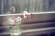 素材背景壁紙桜花ピンクpinkの画像(プリ画像)