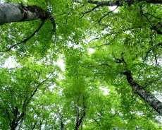 森綺麗待ち受けポエム素材風景景色の画像 プリ画像